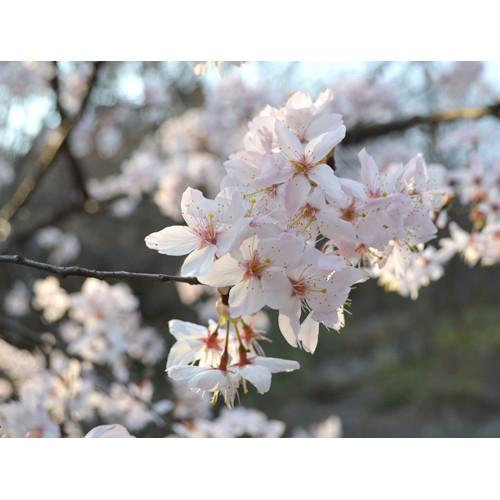 在信阳灵山倾听春天的声音
