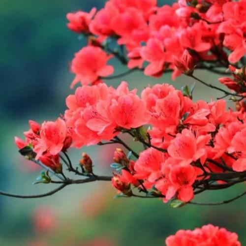 带上心爱的人,在龙峪湾开启一场浪漫的旅行