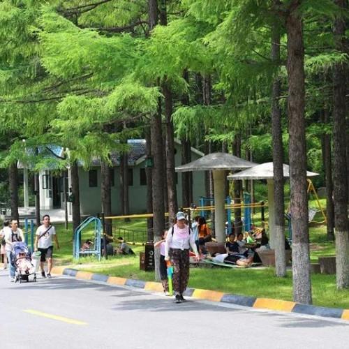 度过一个美妙的夏天,2019龙峪湾首届森林音乐狂欢节即将拉开帷幕