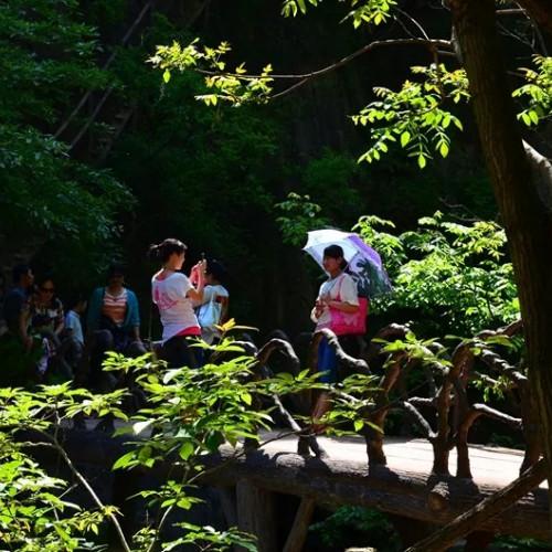 寻觅山林野趣,感受龙峪湾21度的夏天