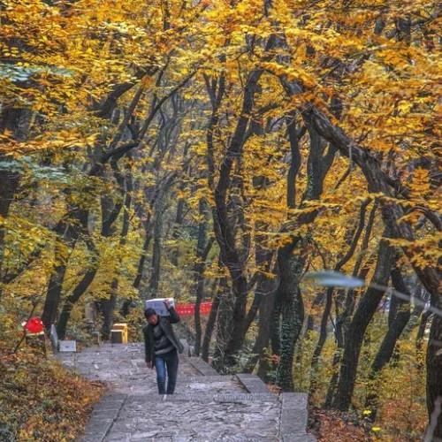 抱犊崮的秋天演绎着大自然炫艳的秋歌