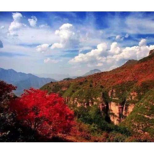 秋沟的秋天,满山的红叶,如火如炬
