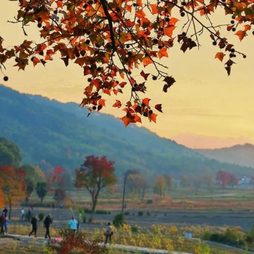 你已看过春夏美景,秋天应该属于你的塔川