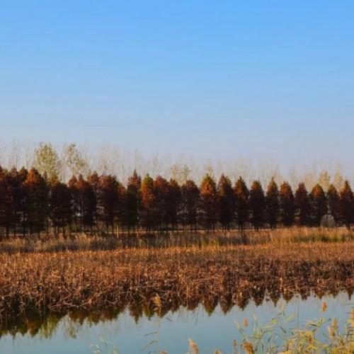冬日的洪泽湖湿地枝叶间都饱含着别样的风情