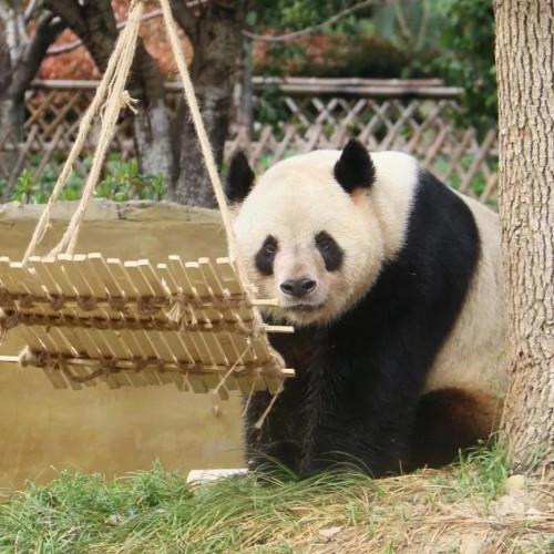 安徽大青山野生动物世界,为你展现一个个鲜活而真实的多彩凡间