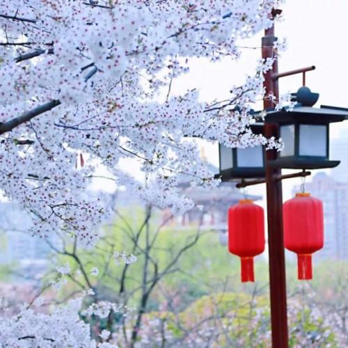 春天与美好的味道,藏在大唐芙蓉园的每一寸角落里
