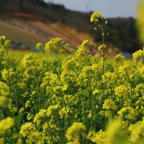 相府庄园的春天都藏在花开花落间
