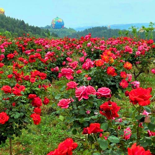 让我们在丹江大观苑相遇,一起寻找初夏的惊艳景色