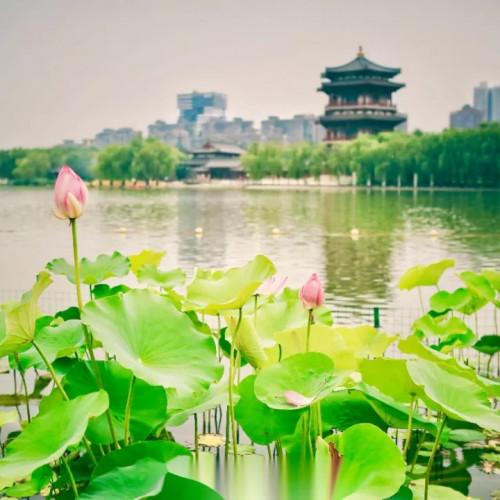 来西安邂逅沐浴在盛夏光年里的大唐芙蓉园
