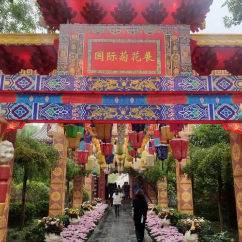 中国开封第九届国际菊花展在清明上河园盛大开幕!