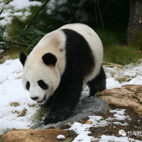 栾川竹海野生动物园:千锅油货免费吃,百桌美酒免费品
