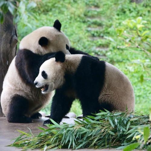 温暖周末时光,和家人一起打卡栾川竹海野生动物园
