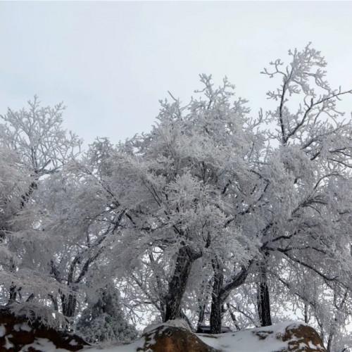 一场大雪将老君山点缀的如同白色仙境