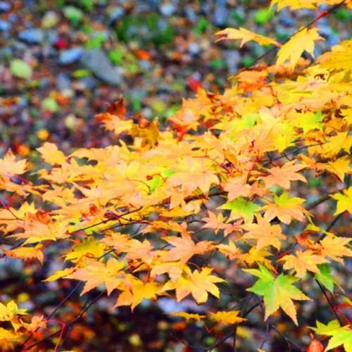 一幅秋高气爽的《金丝秋景图》展现在人们的眼前
